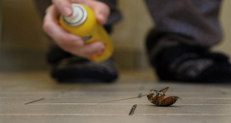 Make Your Home Unappealing to Pests