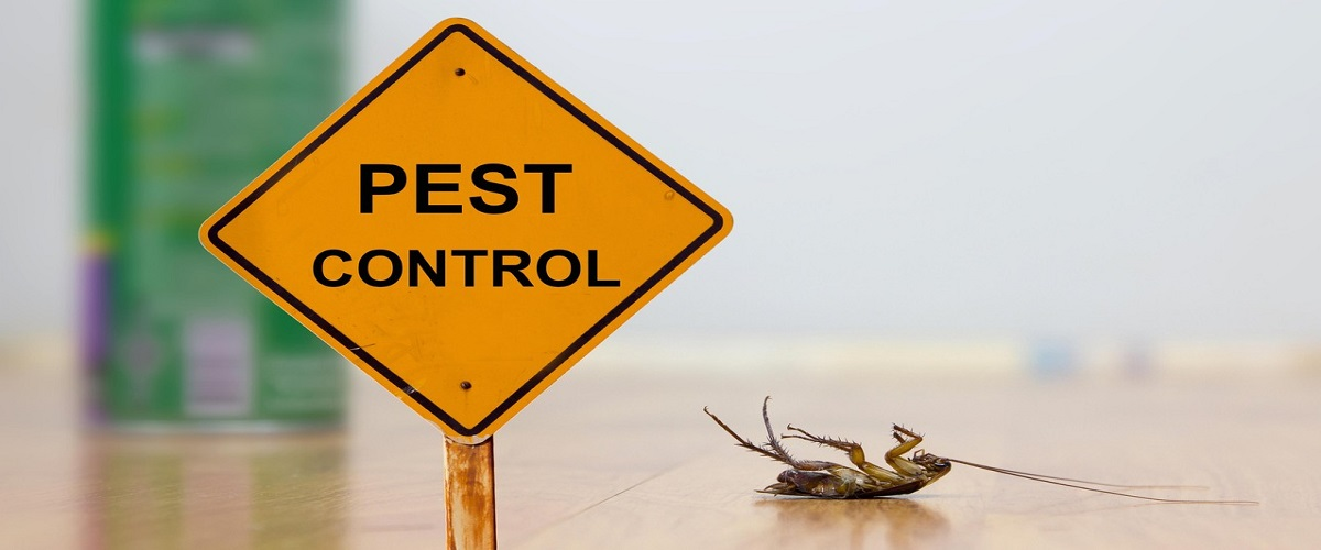 Protect Your Home From Pests